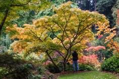 UW Arboretum