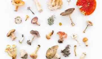 4 Simple Methods To Consume Magic Mushrooms