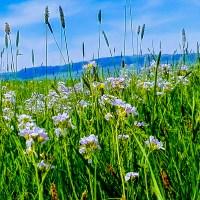 Łąka kwietna czyli sposób na uciążliwy warkot kosiarki
