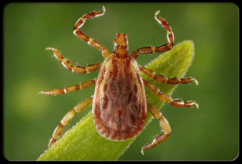 Treating Lyme Disease Naturally With BioMagnetism