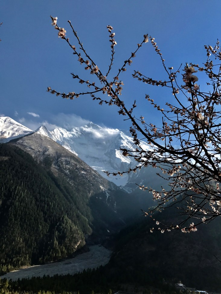 Fruit blossoms framing Annapurnas