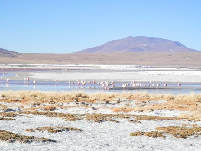 Laguna Colorada Salar d'Uyuni