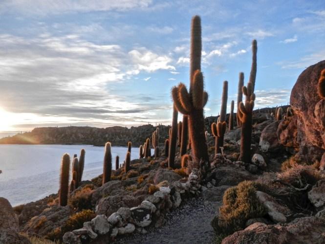 ile cactus Salar d'Uyuni