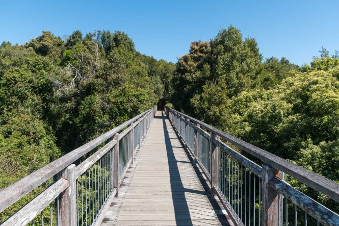 Skywalk Lookout  Dorrigo National Park