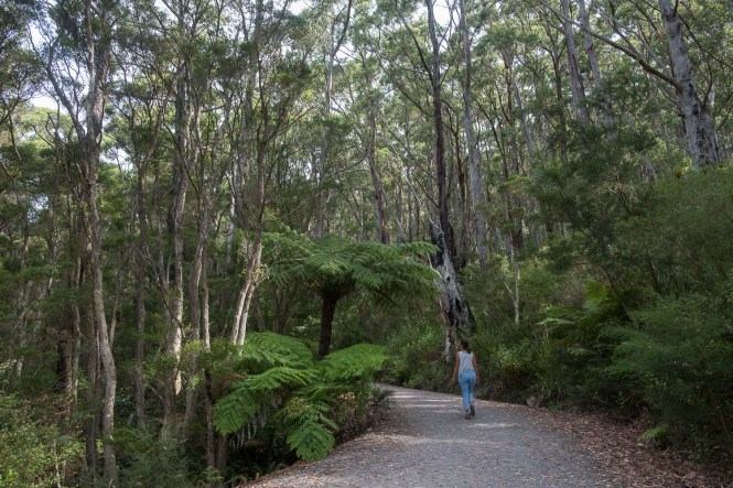 Mount Oberon Summit Track Wilsons Promontory foret