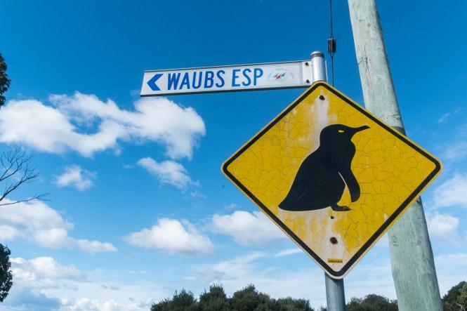 Bicheno Pinguin Tours bay of Fires en tasmanie itinéraire de 2 semaines