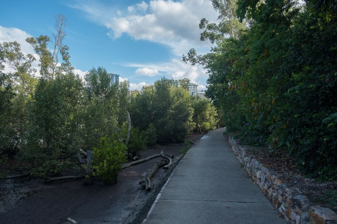 Mangrove Boardwalk visiter brisbane