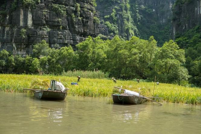 travailleuses rizières baie d'halong terrestre tam coc