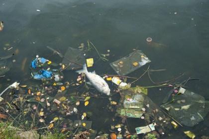 poisson mort Lac de l'Ouest Visiter hanoi