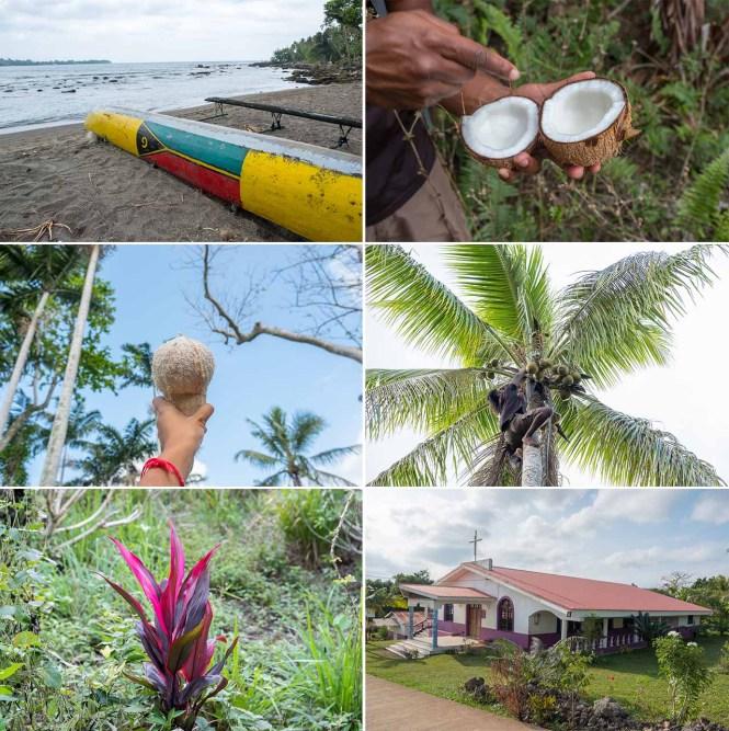 bush-walking-detail-port-vila-vanuatu