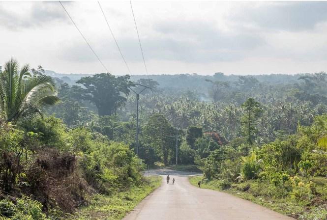 vue-bush-walking-port-vila-vanuatu
