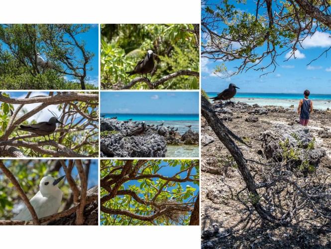 ile-aux-oiseaux-Motu-Puarua
