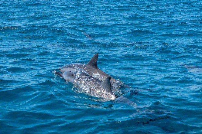 dauphins-ilot-tenia