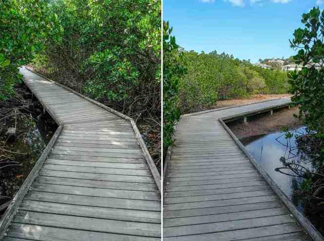 sentier-de-la-mangrove-de-Ouémo-teck