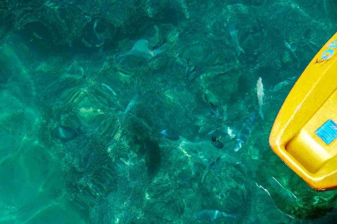 snorkeling-ponton-noumea
