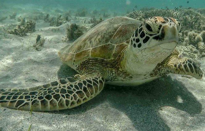 tortue-ilot-tenia