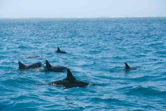 ilot-tenia-nc-dauphins