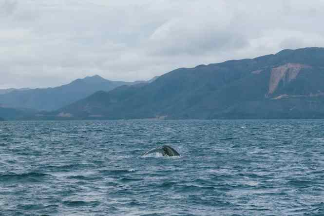Aquanature-baleines