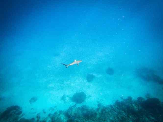 aquanature-passe-de-boulari-requins