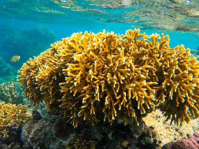 îlot-hugo-recif