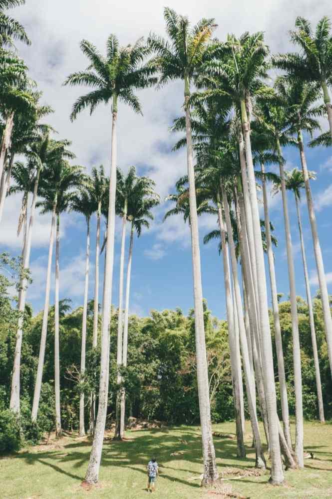 Moindou-Ferme-aux-palmiers-de-la-Ryawa