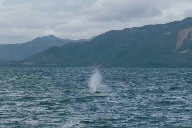 ilot-Casy-baleines