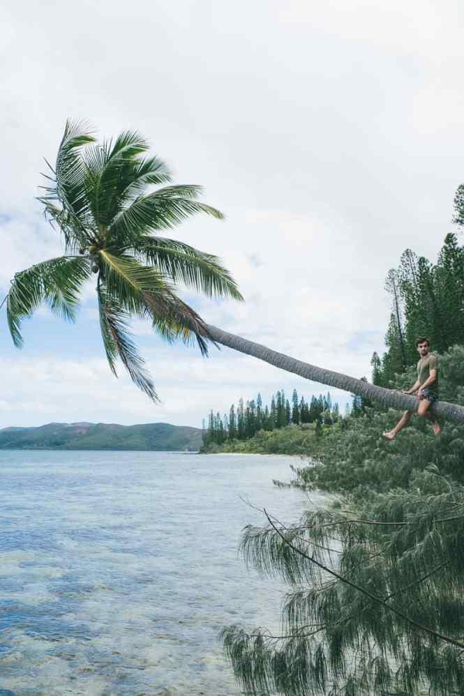 ilot-Casy-palmiers
