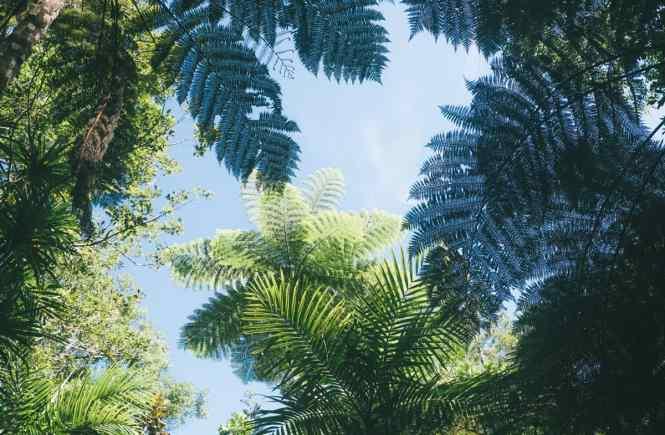 parc-naturel-des-grandes-fougeres-nouvelle-caledonie