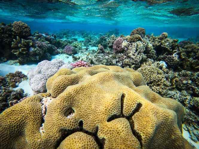recif-toombo-aquanature