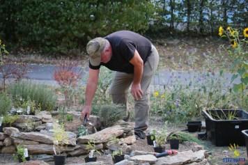 Axel kümmert sich um Zone IV und die Fugenpflanzen.