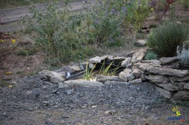Auch der Teich bekommt als Zone V eine Bepflanzung. Vielleicht ziehen ja sogar Molche ein?