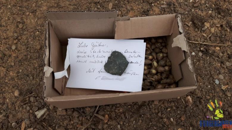 Vielen Dank für diese Spende von Demeter-Steckzwiebeln, die wir erfreut im Tomatenstand finden durften!