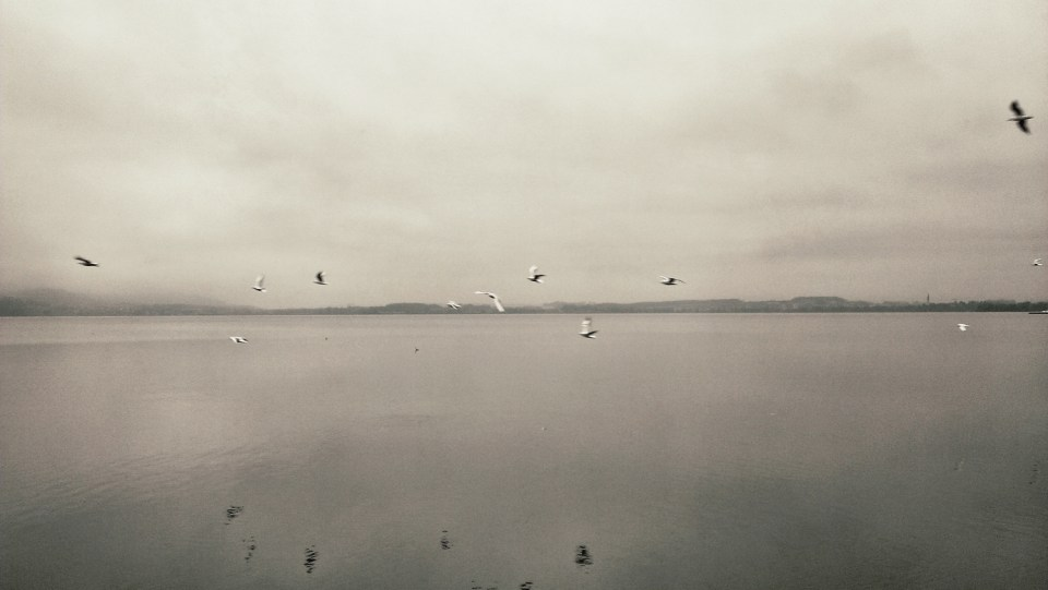Birds-Passing-By