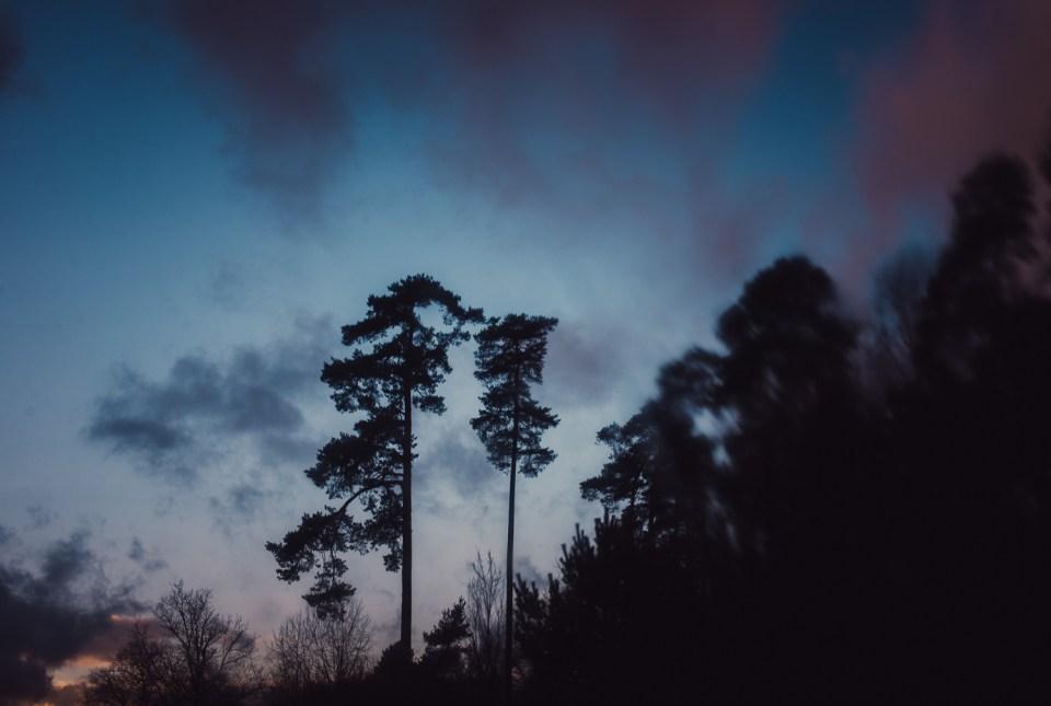 Festbrennweite Winter Himmel Bäume Sonnenuntergang
