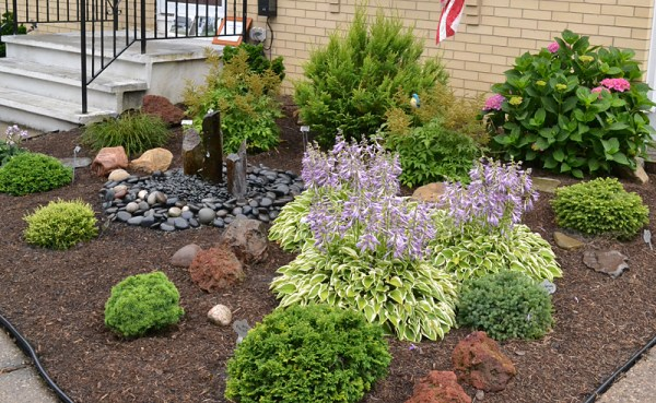slow-growing shrubs create -maintenance