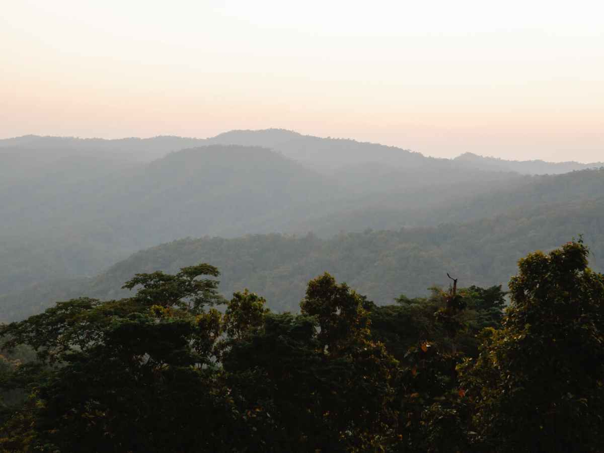 lush forest growing on mountains slopes at sundown