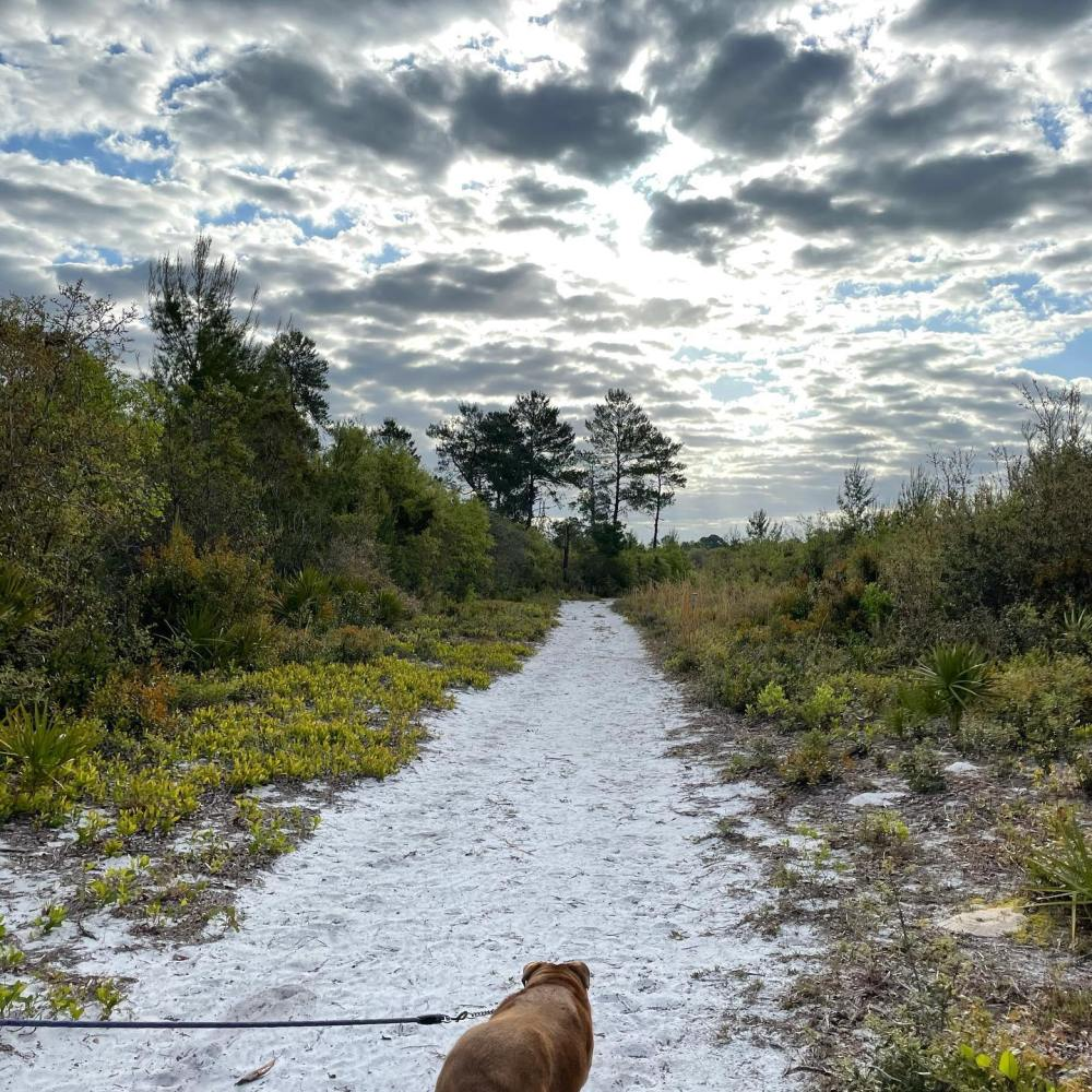 walk and talk therapy Florida nature therapist