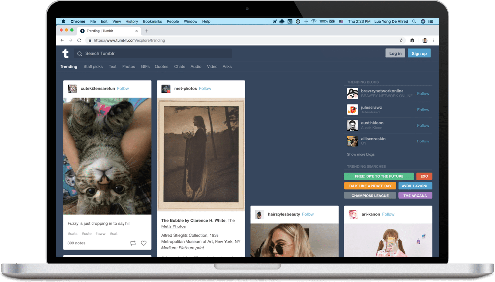 Tumblr feed screenshot