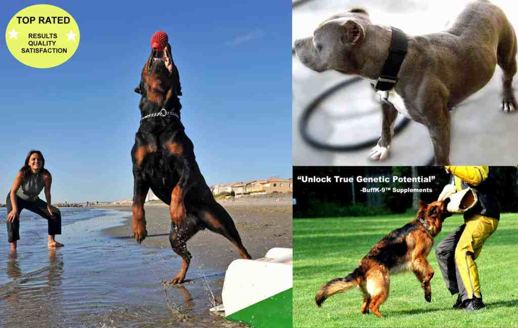 dog supplements dog muscle supplements vitamins for pitbulls rottweilers