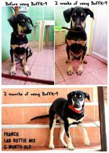lab rottweiler mix weight gain