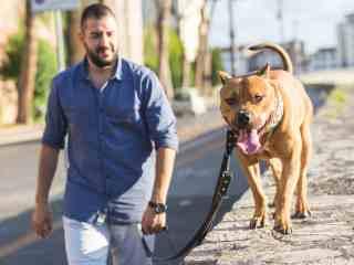 raw dog food for pitbull dog endurance supplement