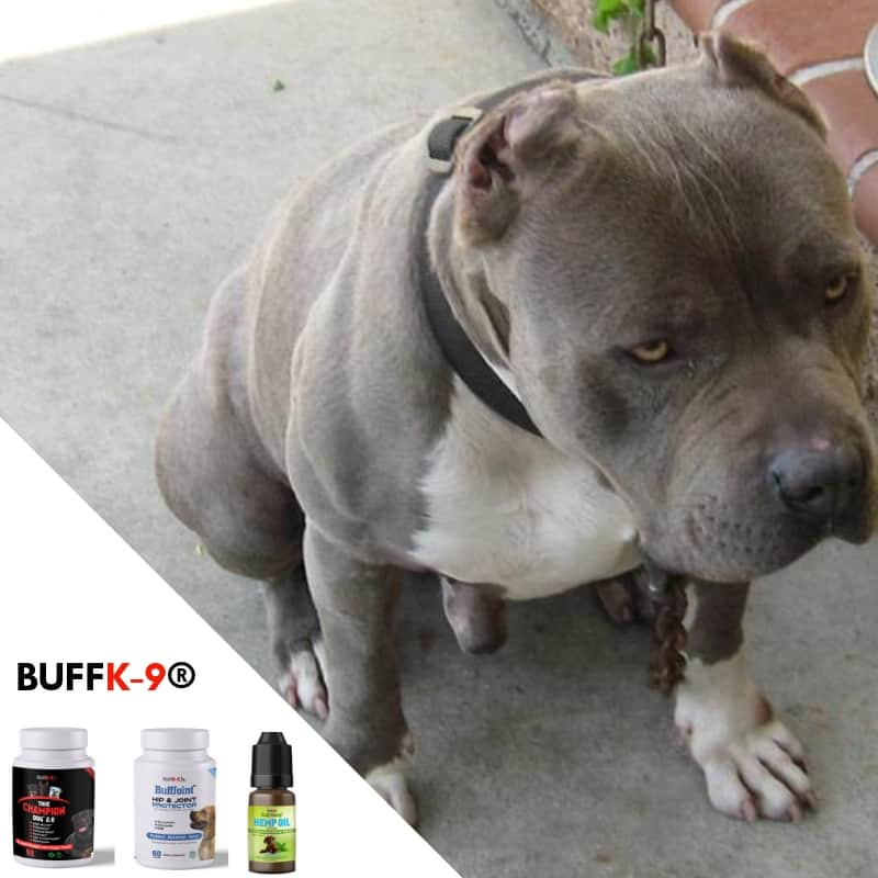 buff k9 adopting a pitbull dog supplements vitamins for muscle weight gain