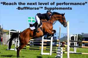 equine health supplements performance recovery horses
