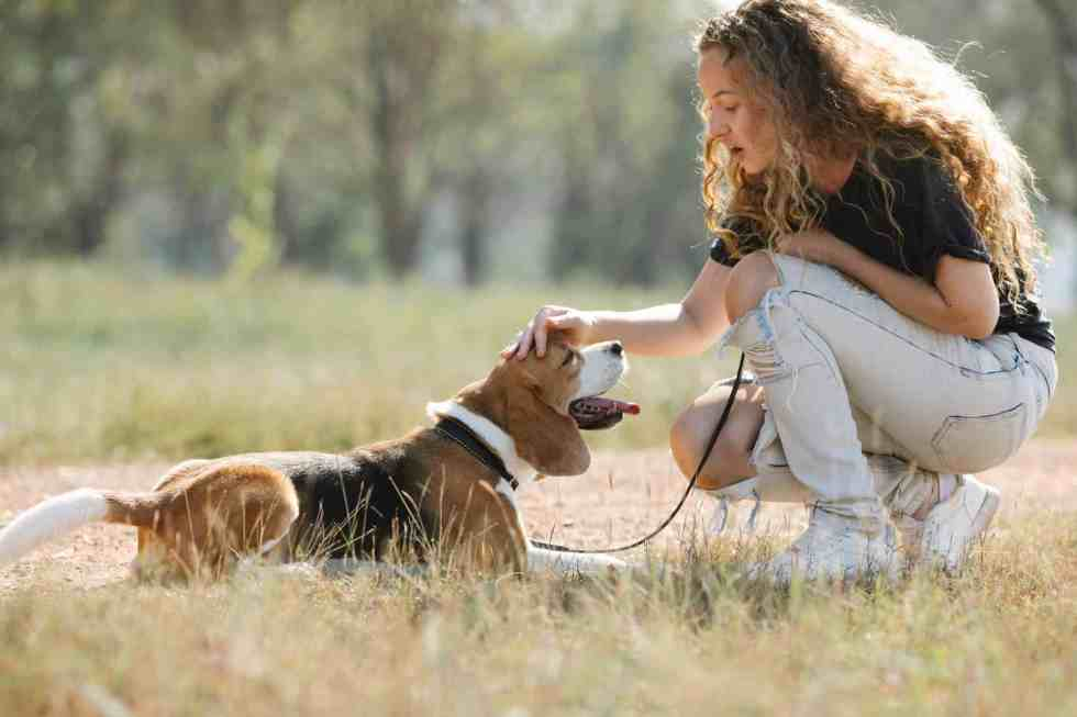 woman with beagle dog in countryside