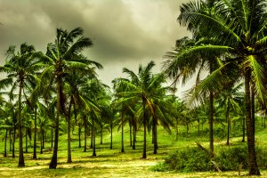 Read more about the article Monsoon in Goa