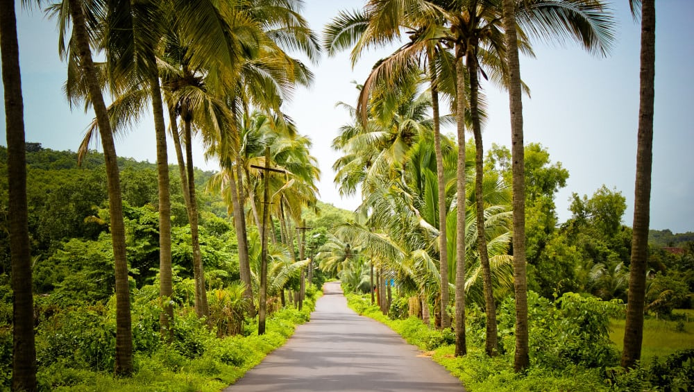 11 things to do in Goa