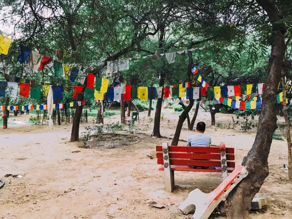 Prayer flags on trees in delhi