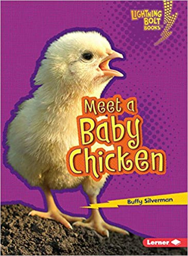 Meet a Baby Chicken