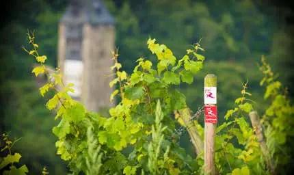 Burgen, Wandern und Wein ziehen Gäste an den Oberen Mittelrhein. (Foto: Piel)