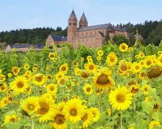 Die Abtei St. Hildegard in Rüdesheim wurde 1904 von 12 Benediktinerinnen gegründet. (Foto: Tourist-AG/Karlheinz Walter)